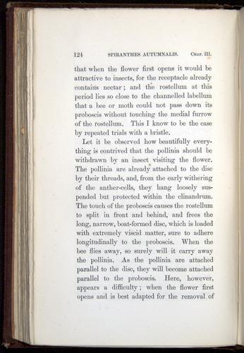 Image of Darwin-F800-1862-00124