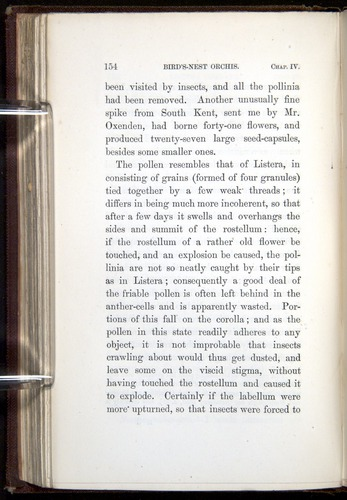 Image of Darwin-F800-1862-00154