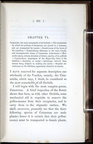Image of Darwin-F800-1862-00211