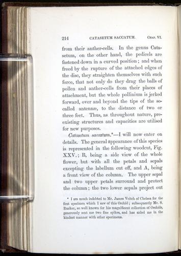 Image of Darwin-F800-1862-00214