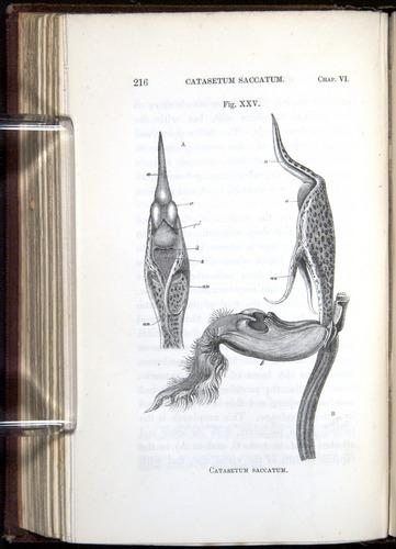 Image of Darwin-F800-1862-00216