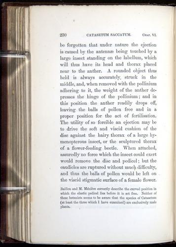 Image of Darwin-F800-1862-00230