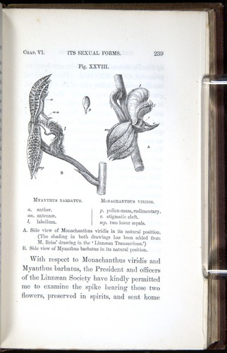 Image of Darwin-F800-1862-00239