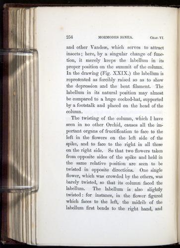 Image of Darwin-F800-1862-00254