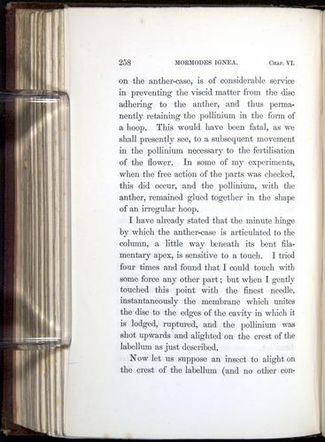 Image of Darwin-F800-1862-00258