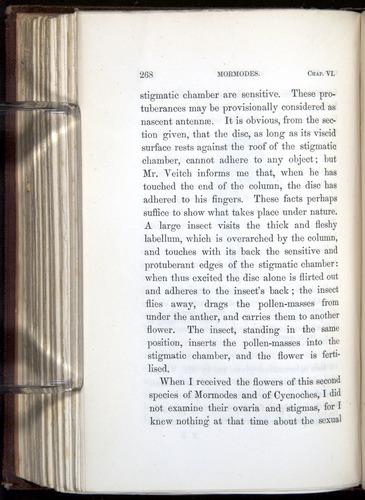 Image of Darwin-F800-1862-00268