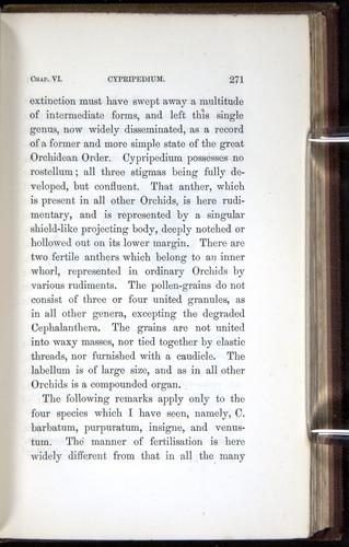 Image of Darwin-F800-1862-00271