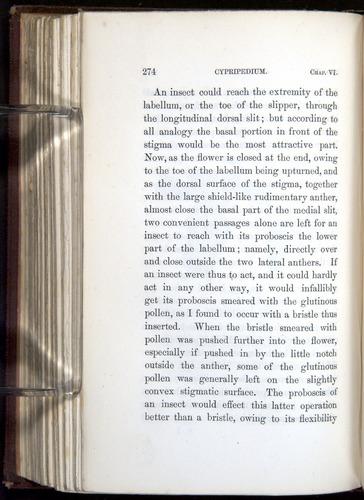 Image of Darwin-F800-1862-00274