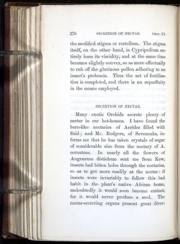 Image of Darwin-F800-1862-00276