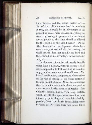 Image of Darwin-F800-1862-00280