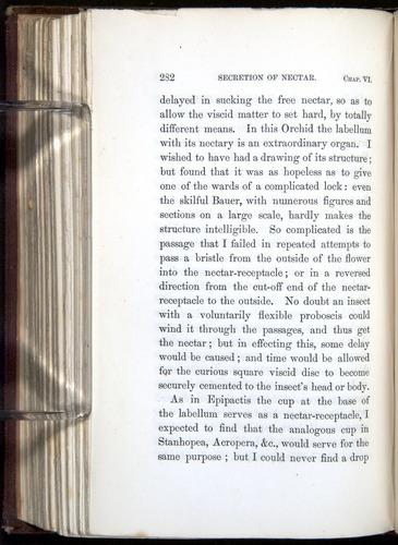 Image of Darwin-F800-1862-00282