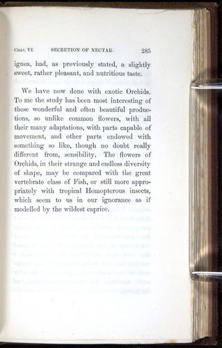 Image of Darwin-F800-1862-00285