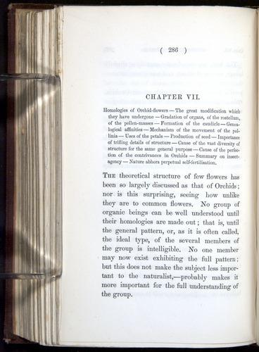 Image of Darwin-F800-1862-00286