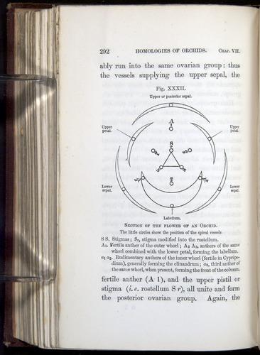 Image of Darwin-F800-1862-00292