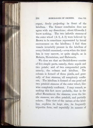Image of Darwin-F800-1862-00294
