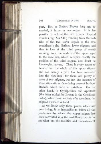 Image of Darwin-F800-1862-00308