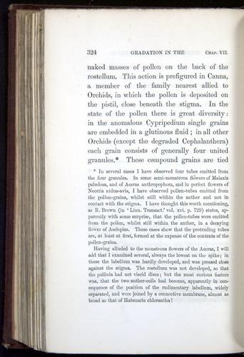 Image of Darwin-F800-1862-00324