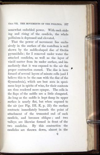 Image of Darwin-F800-1862-00337