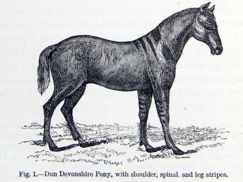 Image of Darwin-F878.1-1868-zzzzzz-det-00056