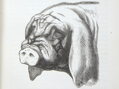 Image of Darwin-F878.1-1868-zzzzzz-det-00069
