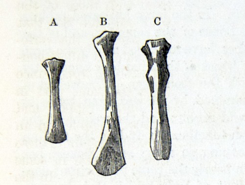 Image of Darwin-F878.1-1868-zzzzzz-det-00123-1