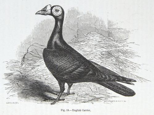 Image of Darwin-F878.1-1868-zzzzzz-det-00140