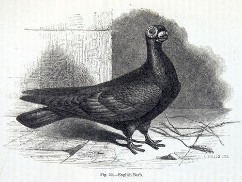 Image of Darwin-F878.1-1868-zzzzzz-det-00145