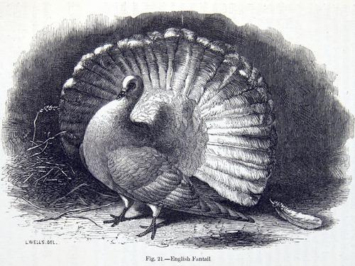 Image of Darwin-F878.1-1868-zzzzzz-det-00147