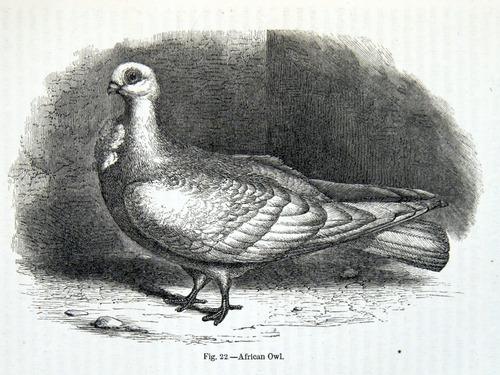 Image of Darwin-F878.1-1868-zzzzzz-det-00149