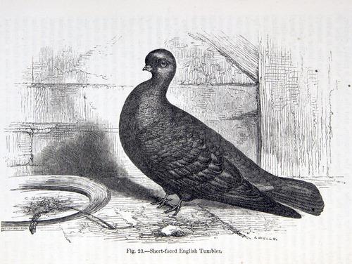 Image of Darwin-F878.1-1868-zzzzzz-det-00152