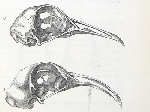 Image of Darwin-F878.1-1868-zzzzzz-det-00163-2