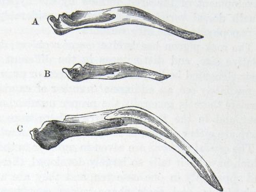 Image of Darwin-F878.1-1868-zzzzzz-det-00165
