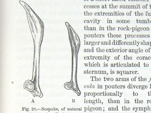 Image of Darwin-F878.1-1868-zzzzzz-det-00167