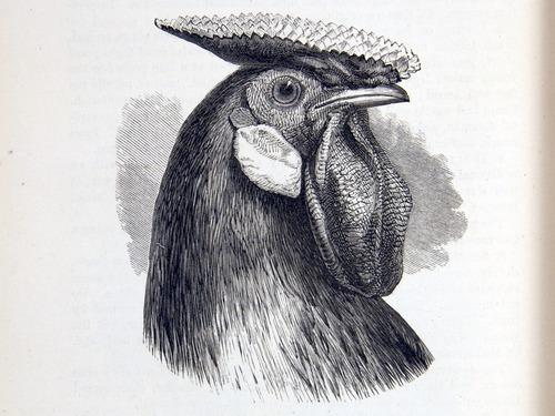Image of Darwin-F878.1-1868-zzzzzz-det-00228