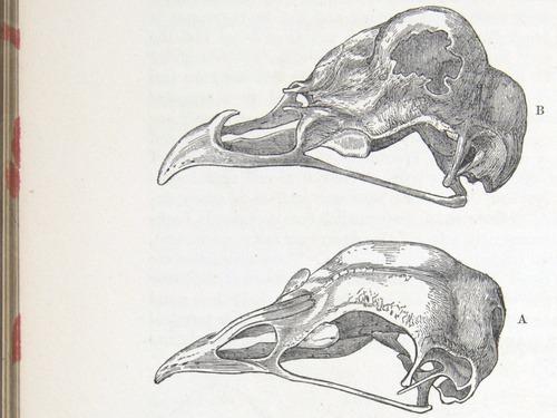 Image of Darwin-F878.1-1868-zzzzzz-det-00262