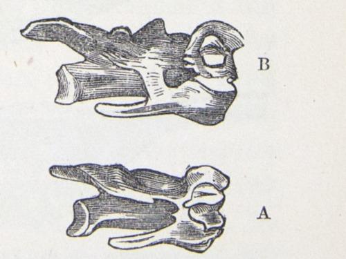 Image of Darwin-F878.1-1868-zzzzzz-det-00267