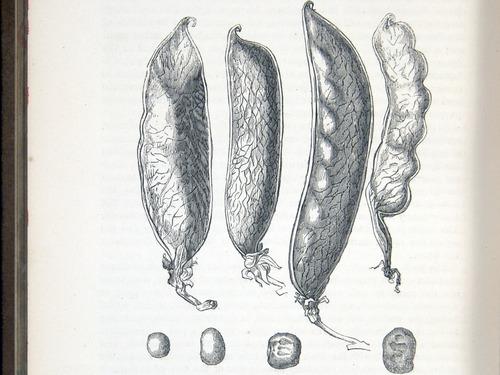 Image of Darwin-F878.1-1868-zzzzzz-det-00328