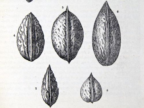 Image of Darwin-F878.1-1868-zzzzzz-det-00337-2