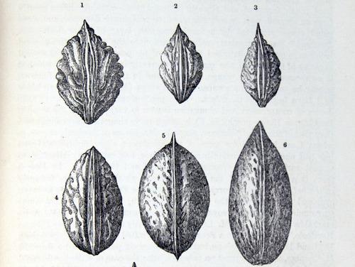 Image of Darwin-F878.1-1868-zzzzzz-det-00337
