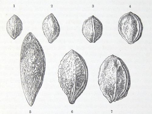 Image of Darwin-F878.1-1868-zzzzzz-det-00345