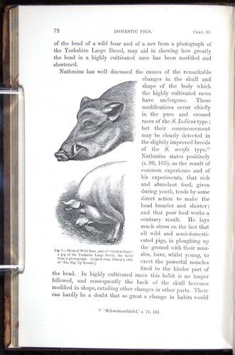 Image of Darwin-F878.1-1868-00072