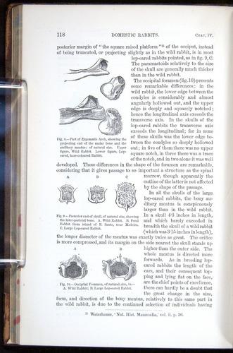 Image of Darwin-F878.1-1868-00118