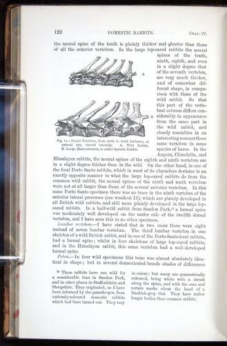 Image of Darwin-F878.1-1868-00122