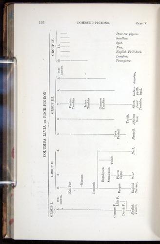 Image of Darwin-F878.1-1868-00136