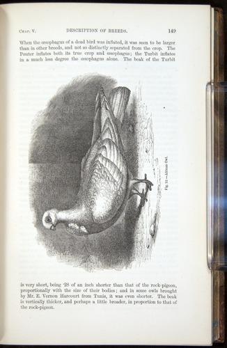 Image of Darwin-F878.1-1868-00149