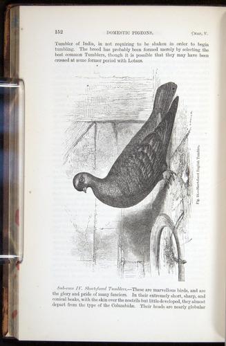 Image of Darwin-F878.1-1868-00152