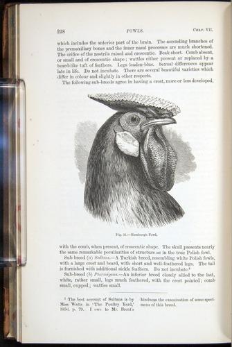 Image of Darwin-F878.1-1868-00228