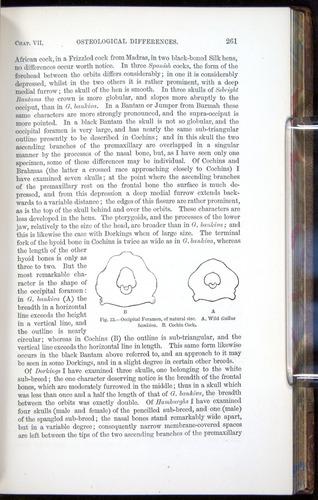Image of Darwin-F878.1-1868-00261