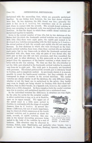 Image of Darwin-F878.1-1868-00267