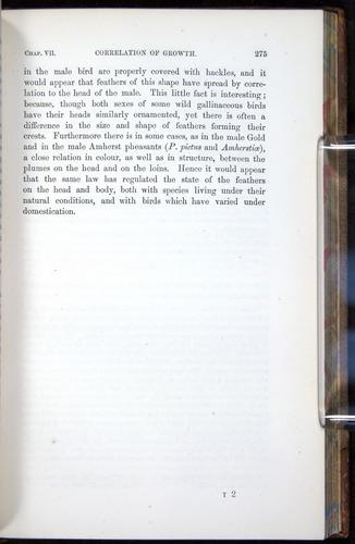 Image of Darwin-F878.1-1868-00275
